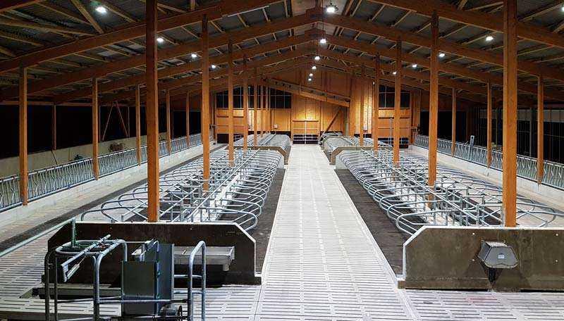 LED Hallenstrahler Kuhstall