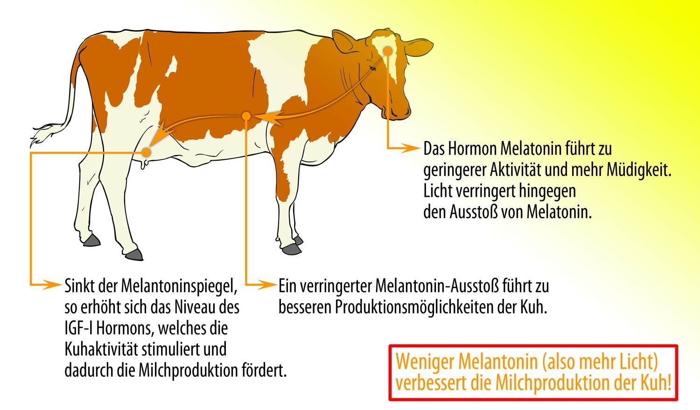 WSH Stallbeleuchtung Grafik Melatonin