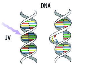 UVC Licht und DNA